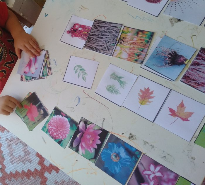 Free printable - parts of the plant sorting cards