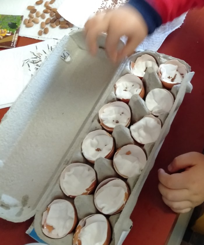 Planting seeds in egg shells
