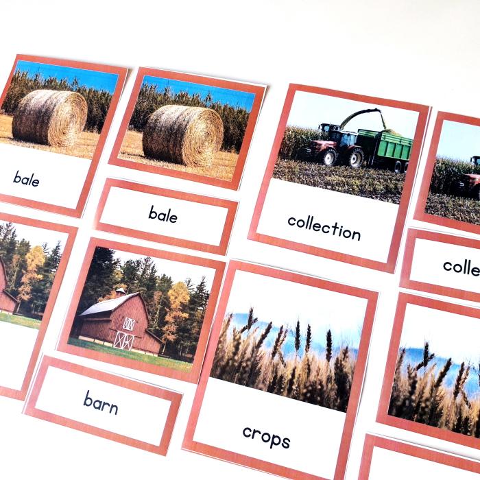 Harvest 3 part cards for kids