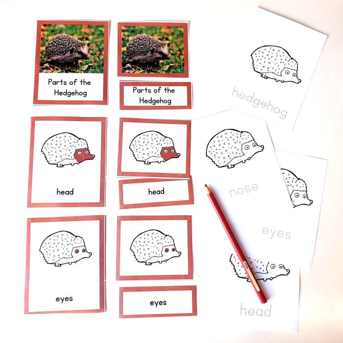 Parts of a hedgehog 3 part cards