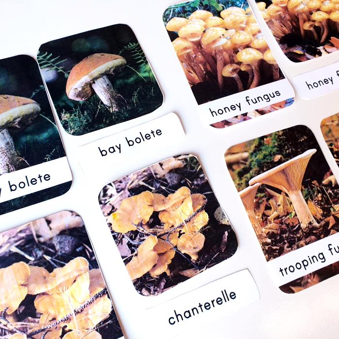 Mushroom 3 part cards