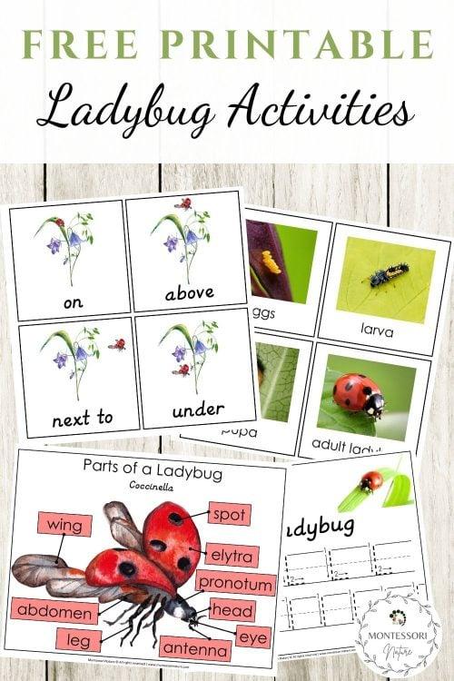 Pin Ladybug Preschool Learning Activities Montessori Nature Free Printable