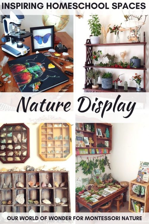 Pin Nature Display Montessori Nature Our World of Wonter post