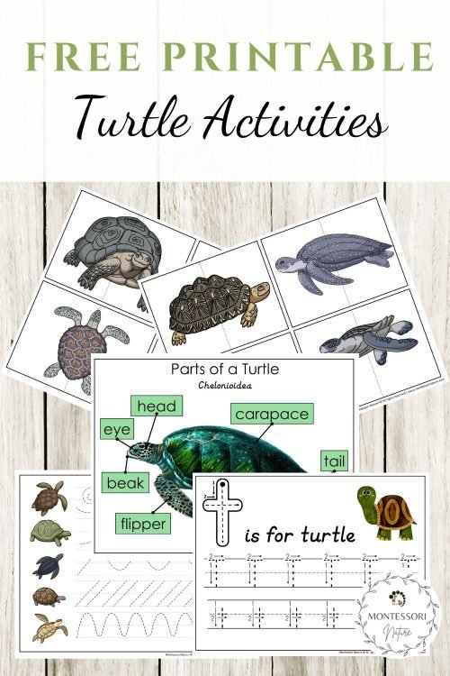 Turtle Activities Free Montessori Nature Printable